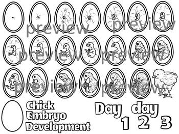 Chick Embryo Development Clipart (color and black and white)