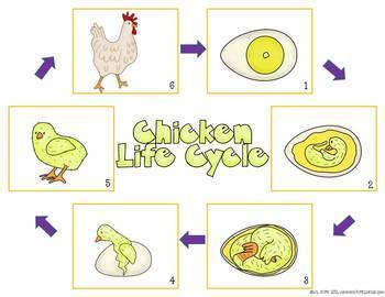 Chick Adoptions: Creative Mini Unit for Spring