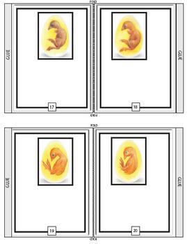 Chick Embryo Development Book  - Journal