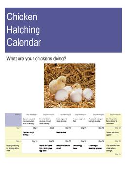 Chick Hatching Calendar