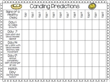 Chick Hatching- Candling Predictions Chart