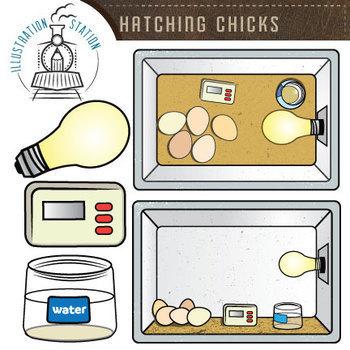 Hatching Chicks Clip Art