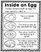 Chick Journal: Explore Chick Life Cycle, Parts of a Chick Egg, & More!