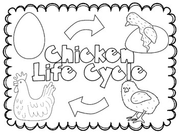 Animal Life Cycles BUNDLE