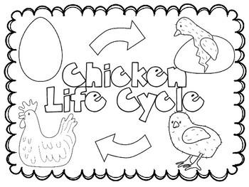 Animal Life Cycles BUNDLE