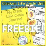 Chick Life Cycle Freebie 2