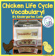 Chick Life Cycle Vocabulary
