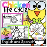 Chicken Life cycle {Craft and Printables in English and Spanish}