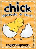 Chick life cycle + facts