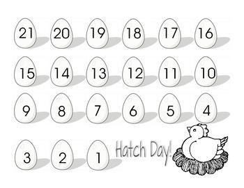 Chicken Egg Hatch Countdown