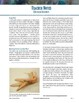 Chicken Foot Dissection: Bones and Muscles and Tendons Study, PDF Instructions