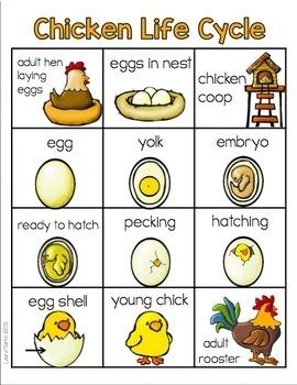 Chicken Worksheets Kindergarten