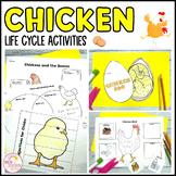 Chicken Life Cycle Activities