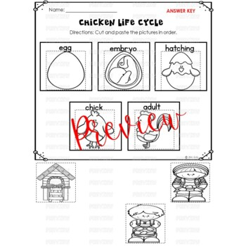 Chicken Life Cycle Activities for Kindergarten and First Grade