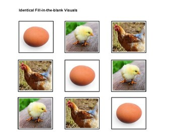 Chicken Life Cycle Adapted Book Level 4