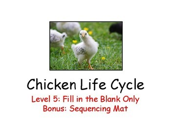 Chicken Life Cycle Adapted Book Level 5