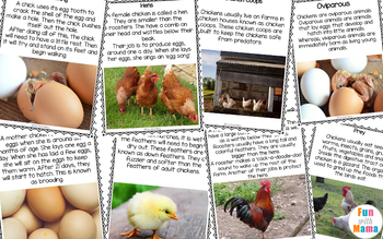 Chicken Life Cycle + Animal Study