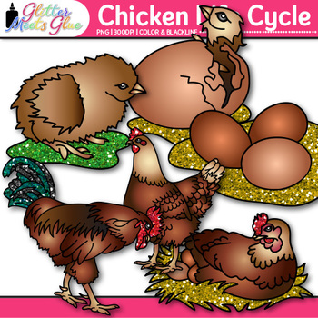 Chicken Life Cycle Clip Art {Teach Farm Animals, Habitats, & Adaption}