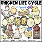 Chicken Life Cycle Clip Art (34 Graphics) Whimsy Workshop