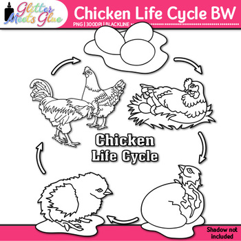 Chicken Life Cycle Clip Art | Teach Farm Animals, Habitats, & Adaption | B&W