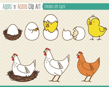 Chicken Life Cycle Clip Art - color and outlines