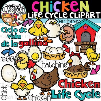 Chicken Life Cycle Clipart {Life Cycles Clipart}
