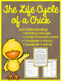 Chicken Life Cycle - Comprehension and other activities