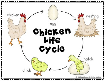Chicken Life Cycle Craftivity