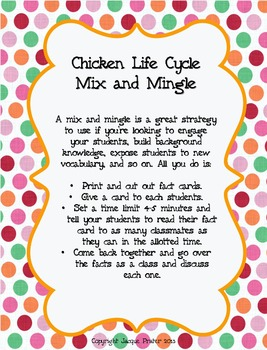 Chicken Life Cycle Craziness