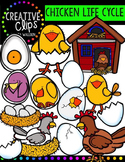 Chicken Life Cycle {Creative Clips Digital Clipart}