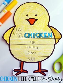 chicken life cycle by karen jones teachers pay teachers