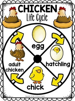 image relating to Life Cycle of a Chicken Printable titled Rooster Lifetime Cycle Interactive Wheel Craft FREEBIE!