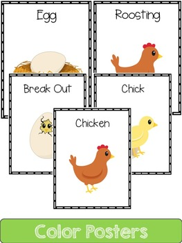 Chicken  Life Cycle: Mini Unit