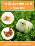Chicken Life Cycle Unit for Preschool, Kindergarten, or First Grade