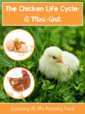 Chicken Life Cycle - Unit for Preschool, Kindergarten, or First Grade