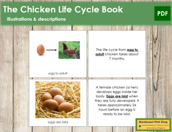 Chicken Life Cycle Nomenclature Book