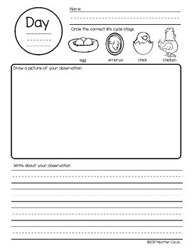 Chicken Life Cycle Science Journal Observation Pages {PK-1} FREE