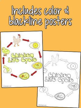 Chicken Life Cycle Set