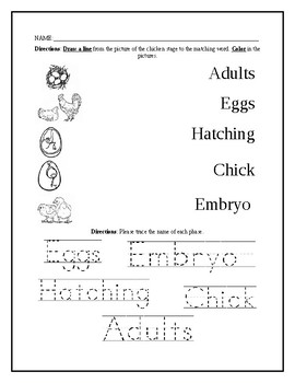 Chicken Life Cycle Worksheet by Elisha Carter | Teachers Pay Teachers