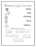 Chicken Life Cycle Worksheet