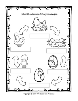 LIFE CYCLE Chicken and Egg Anatomy