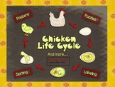Chicken Life Cycle and More! (Common Core Aligned!)