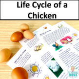 Chicken Life Cycle for Third Grade NGSS 3-LS1-1 and Utah S