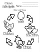 Chicken Life Cycle for Toddlers