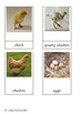 Chicken Life cycle Montessori cards