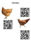 Chicken QrCode