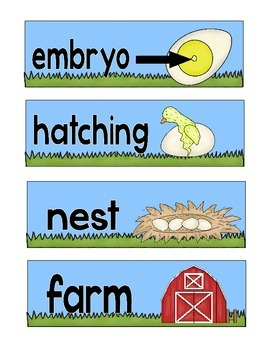 Chicken life cycle- Bilingual