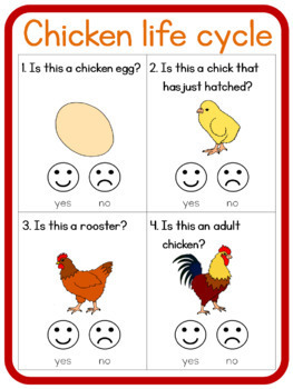 Chicken life cycle circle time questions