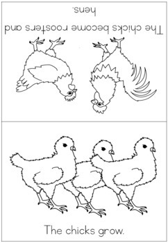 Chicken life cycle coloring booklet