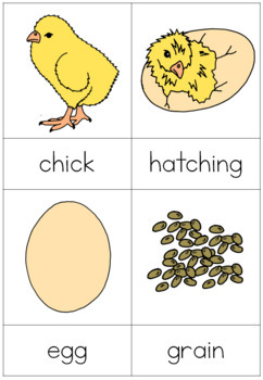Chicken life cycle nomenclature cards